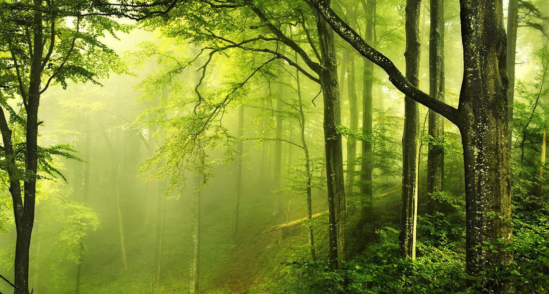 Foresta edilizia bosco